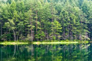 深緑の御射鹿池の写真素材 [FYI01190660]