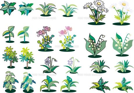 草花の素材のイラスト素材 [FYI01190917]