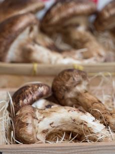 店頭に並んだ松茸の写真素材 [FYI01190969]
