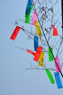 湘南ひらつか七夕まつり / 関東三大七夕祭りの写真素材 [FYI01191116]