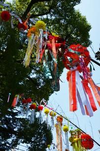 湘南ひらつか七夕まつり / 関東三大七夕祭りの写真素材 [FYI01191118]