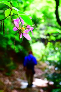 花と山道の写真素材 [FYI01191426]