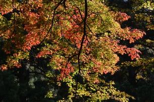 秋の大雄山最乗寺の写真素材 [FYI01191593]