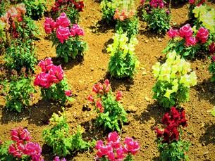 初夏の葉の写真素材 [FYI01191997]