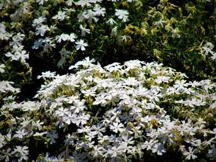 初夏の葉の写真素材 [FYI01192004]