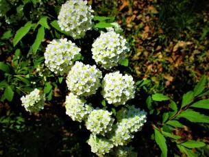 初夏の葉の写真素材 [FYI01192007]