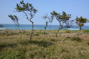 サーフィンスポット / 福岡県糸島市志摩芥屋海岸の写真素材 [FYI01192084]