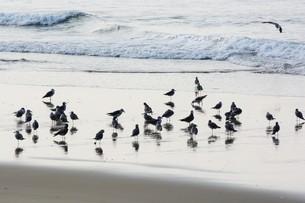 海鳥のシルエットの写真素材 [FYI01192100]