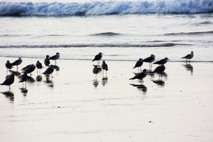 海鳥のシルエットの写真素材 [FYI01192102]