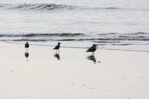 海鳥のシルエットの写真素材 [FYI01192105]