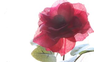 造花(バラ)の写真素材 [FYI01192278]