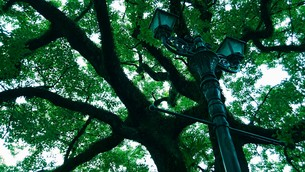 楠と街灯の写真素材 [FYI01192285]