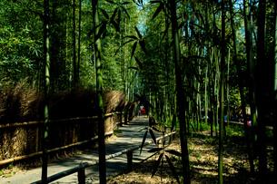 竹林の写真素材 [FYI01192326]