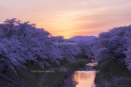 藤田川の桜並木の写真素材 [FYI01192564]