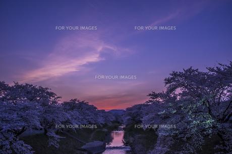 藤田川の桜並木の写真素材 [FYI01192569]