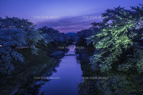 藤田川の桜並木の写真素材 [FYI01192570]