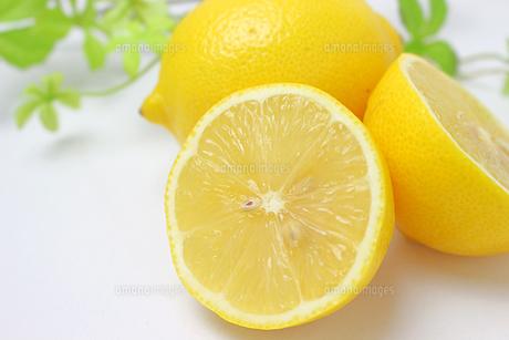 レモンの写真素材 [FYI01192774]