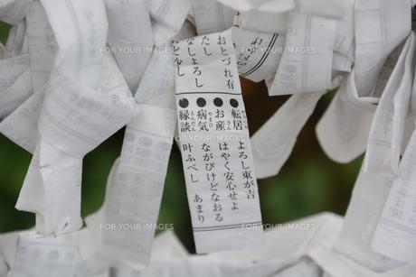 おみくじの写真素材 [FYI01192918]