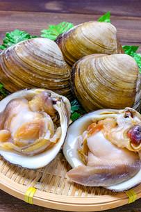 ホッキ貝の写真素材 [FYI01193117]