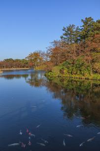 秋の高田城の風景の写真素材 [FYI01193142]