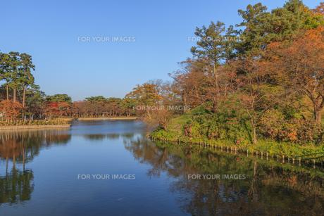 秋の高田城の風景の写真素材 [FYI01193144]
