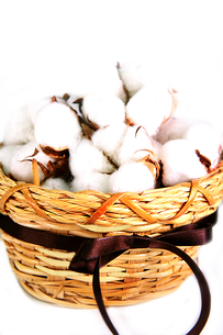 カゴ入りの綿の花の写真素材 [FYI01193265]