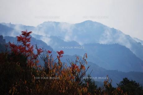 朝霧にうかぶ美しい山なみ / 九州福岡県朝倉市の写真素材 [FYI01193370]
