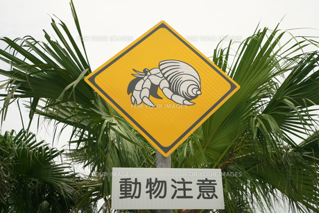 宮古島のヤドカリ注意の標識の写真素材 [FYI01193415]