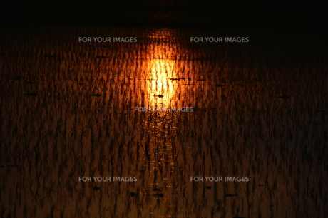 日本の自然美・落日に光る田の写真素材 [FYI01193649]