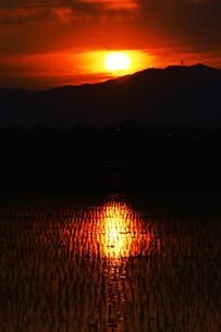 日本の自然美・落日に光る田の写真素材 [FYI01193651]