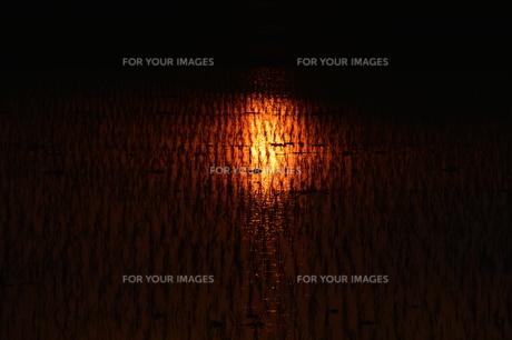 日本の自然美・落日に光る田の写真素材 [FYI01193653]