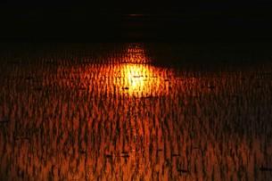 日本の自然美・落日に光る田の写真素材 [FYI01193655]