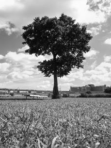 荒川河川敷の写真素材 [FYI01193793]