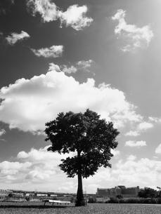 荒川河川敷の写真素材 [FYI01193794]