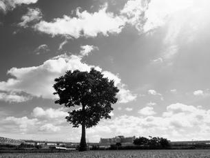 荒川河川敷の写真素材 [FYI01193795]
