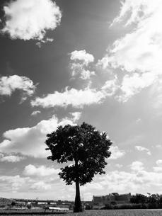 荒川河川敷の写真素材 [FYI01193796]