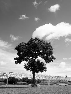 荒川河川敷の写真素材 [FYI01193797]