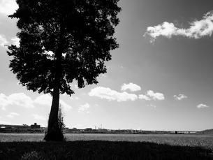 荒川河川敷の写真素材 [FYI01193799]