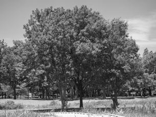 東京都 舎人公園の写真素材 [FYI01193812]