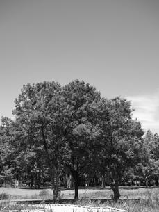 東京都 舎人公園の写真素材 [FYI01193813]