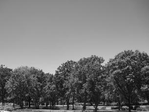 東京都 舎人公園の写真素材 [FYI01193814]