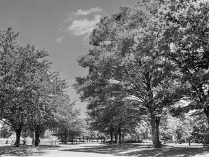 東京都 舎人公園の写真素材 [FYI01193821]