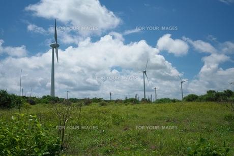 強風の中の西平安名崎の写真素材 [FYI01193865]