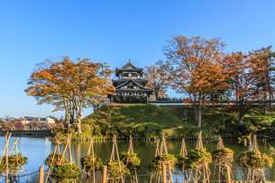 秋の高田城の風景の写真素材 [FYI01193884]