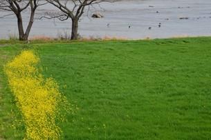 春の筑後川河川敷・九州福岡県朝倉市の写真素材 [FYI01193888]