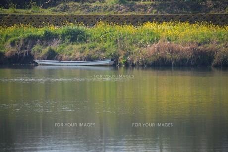 春の筑後川河川敷・九州福岡県朝倉市の写真素材 [FYI01193892]