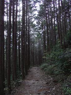 熊捕古道の林道の写真素材 [FYI01194434]