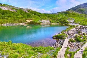 新緑の八方池の写真素材 [FYI01194598]