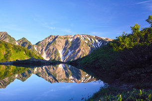 朝日を浴びた新緑の八方池と白馬三山の写真素材 [FYI01194600]