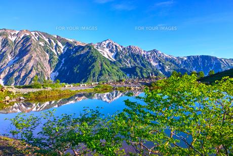朝日を浴びた新緑の八方池と白馬三山の写真素材 [FYI01194606]